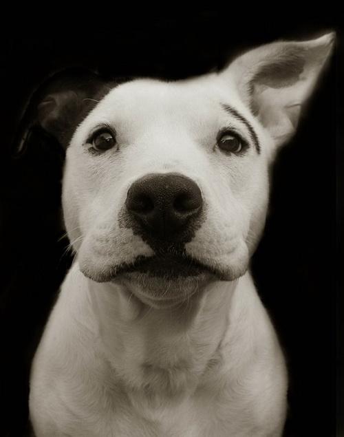 Собаки пытаются вступить в контакт с людьми, используя мимику
