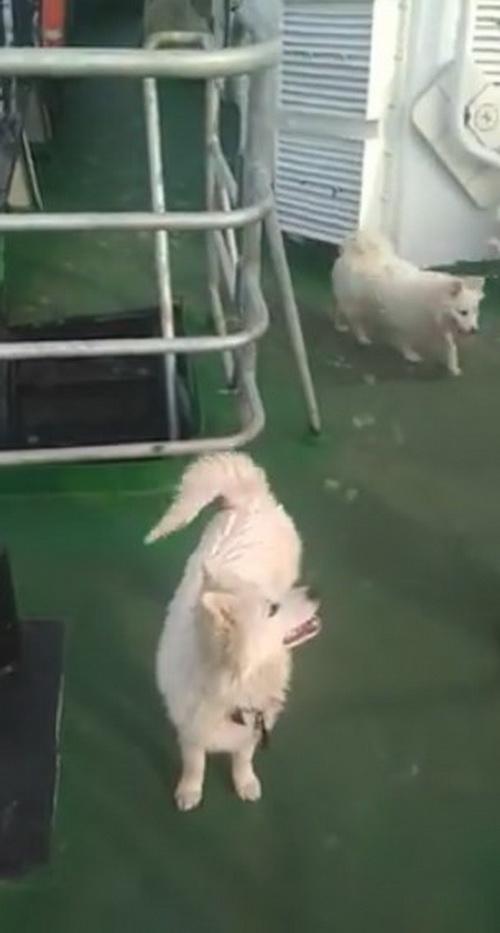 Находка не пускает домой рыбаков из-за отказа усыпить спасенных ими щенят
